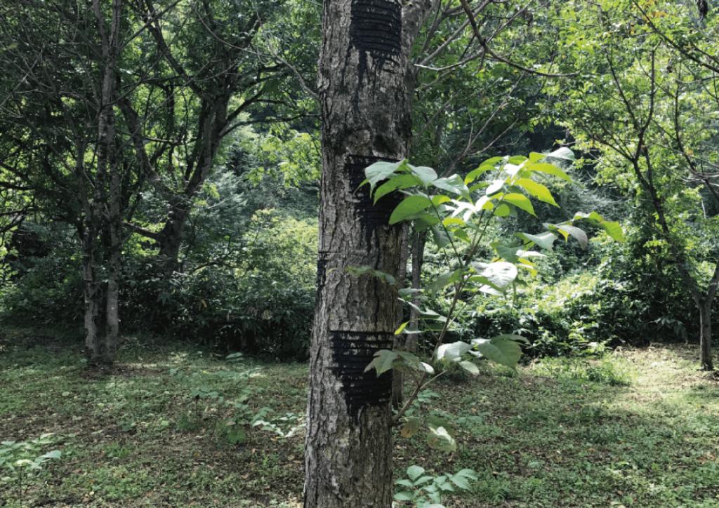 郷原漆器を支える「蒜山高原の自然 」
